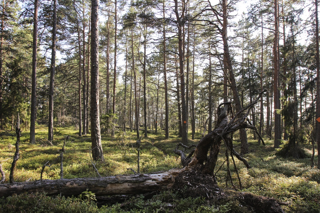 Pori Forest is an outdoors and recreational area full of trails situated in the vicinity of the centre of Pori.